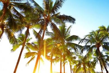 Tiszta Hawaii!