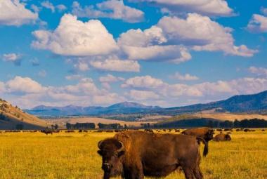 Yellowstone Körutazás